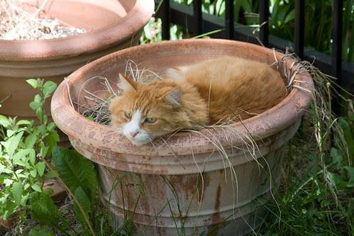 Cat on Pot