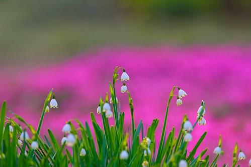 Jindai flower garden