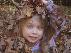 My little willow leaf