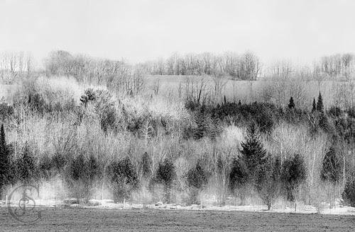 Orillia - Winter Mists