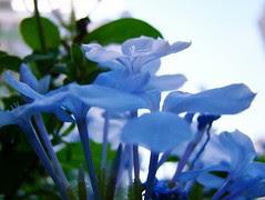 Quinta-BLUE-Flower by Márcia Abreu