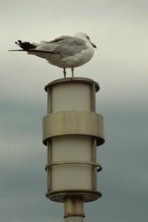 11 guarding his post