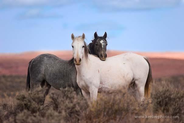 Υπέροχες φωτογραφίες φιλίας ζώων που θα σας φτιάξουν τη διάθεση (15)