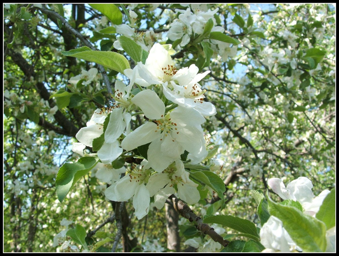 Blooming Blossoms by Angie Ouellette-Tower for godsgrowinggarden.com photo 012_zps2bd82e4b.jpg