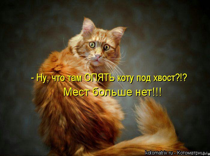 Котоматрица: - Ну, что там ОПЯТЬ коту под хвост?!? Мест больше нет!!!