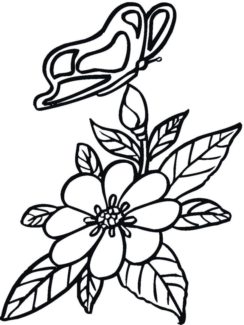 Dibujos De Flores Y Mariposas Imágenes Y Fotos