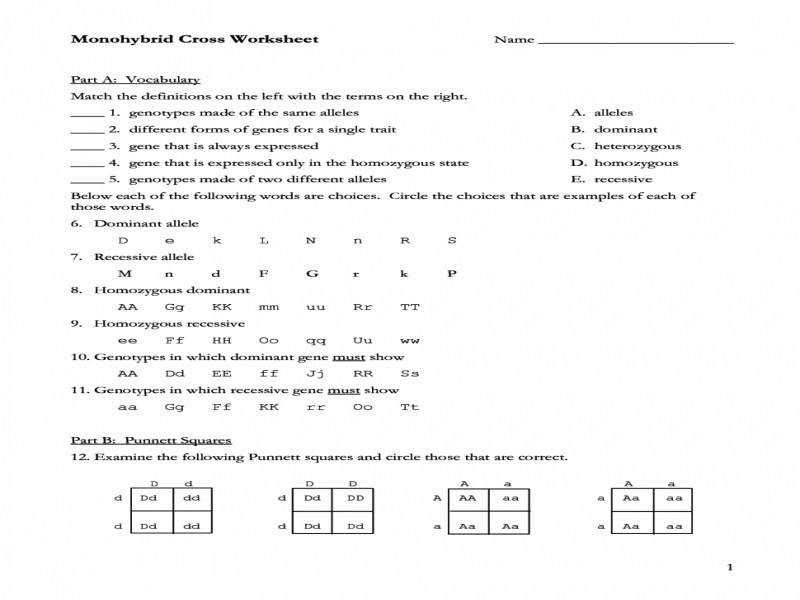 Monohybrid Cross Worksheet Answers  Homeschooldressage.com