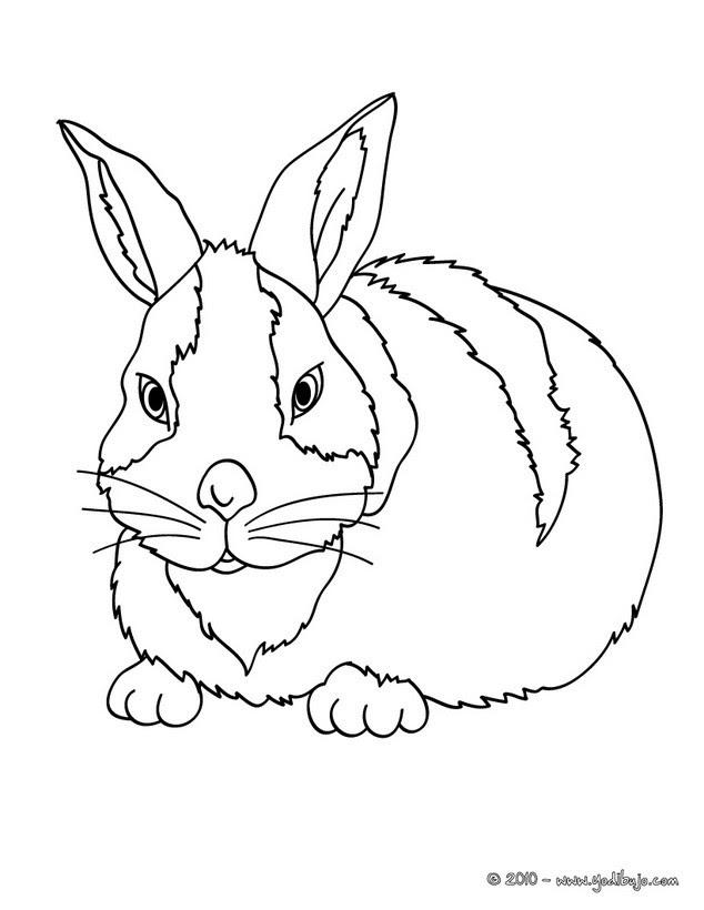 Colorear Conejos 13 Dibujos De Animales Para Colorear Y Pintar En