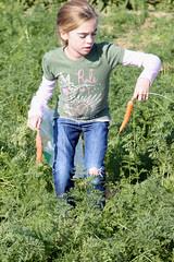 Carrot 2