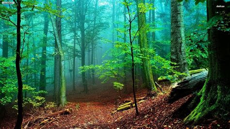 nature forest wallpaper  images