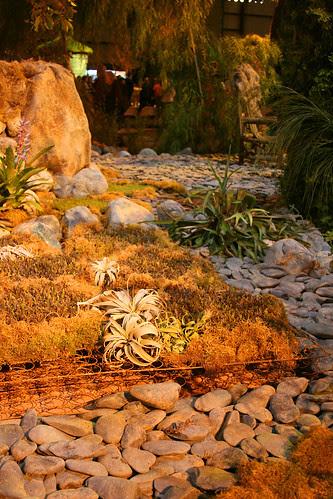 epiphytes and bedsprings