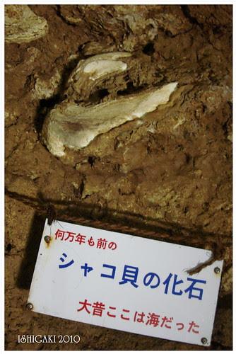 ISHIGAKI2010 (35)
