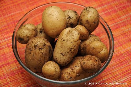 Homegrown Kennebec potatoes