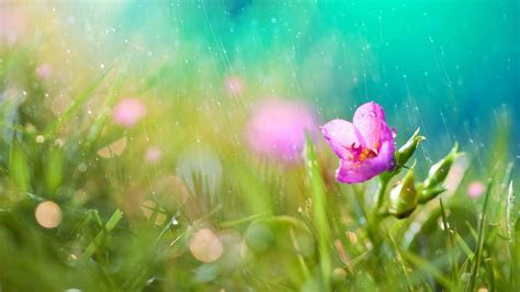 Beautiful Rain HD Wallpapers For Desktop   One HD