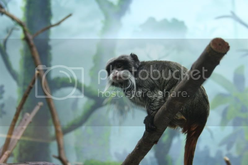 monkey with mustache