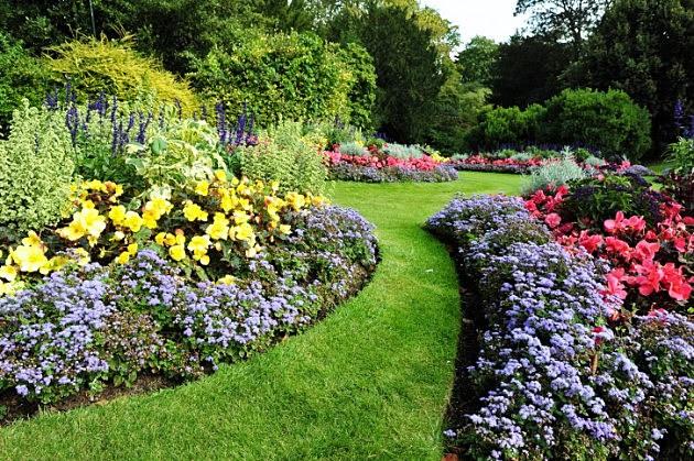 Kwiaty Wieloroczne Kwiaty Wieloletnie Byliny Kwiatowe Ogród Działka