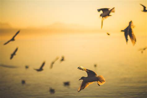 birds silhouette  sunset  stock photo