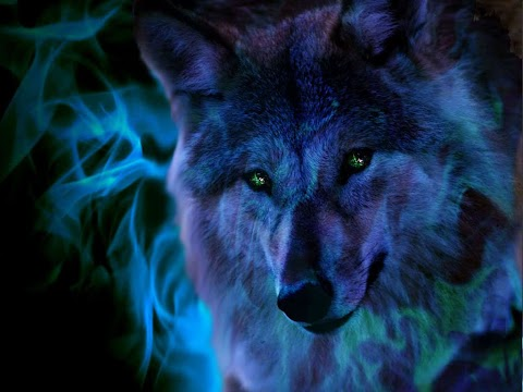 19+ Free Wolf Screensavers And Wallpaper