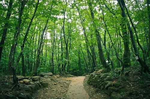 Forest of Zen