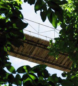 Híd lombkoronában