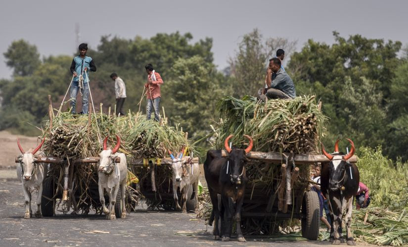 It is also correct that land holdings in India have been declining generally. Although this is true across communities, Marathas would be among the groups that are more deeply affected, as they are primarily an agrarian community. Getty Images
