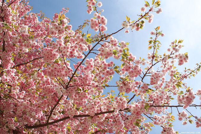 http://i402.photobucket.com/albums/pp103/Sushiina/cityglam/blossom1_zpscea3b80a.jpg