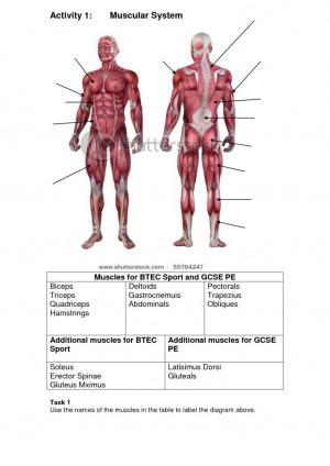 Muscular System Quotes. QuotesGram