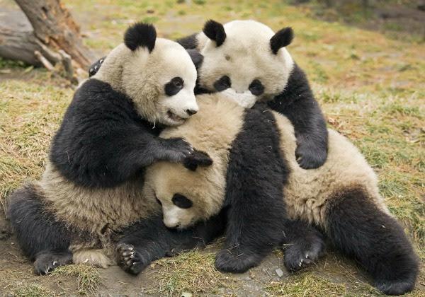 Las 10 fotos más tiernas de animales abrazándose | Fotografía