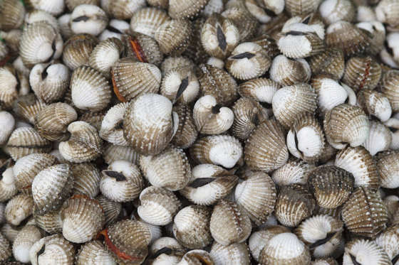Slide 16 de 18: Even if you don't have a shellfish allergy, blood clams are best avoided. The clams can harbour hepatitis A, typhoid and dysentery because they live in lower-oxygen environments. Blood clams from Chinese waters have been linked to hepatitis outbreaks.