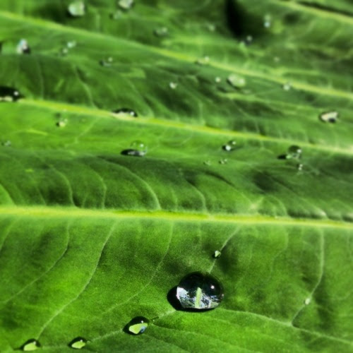 ebnother: TEARS OR RAINDROPS? MAYBE THEY ARE THE SAME.