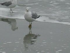 Seagull at Sunset Beach