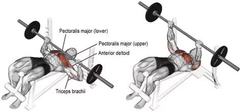 build  big chest    overhead press quora