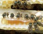 tajne-pčelinjih-proizvoda