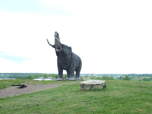 Nova Scotia Mastodon
