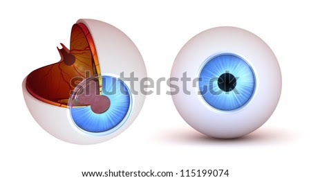 Human Eye Anatomy Stock Photos, Images, & Pictures ...