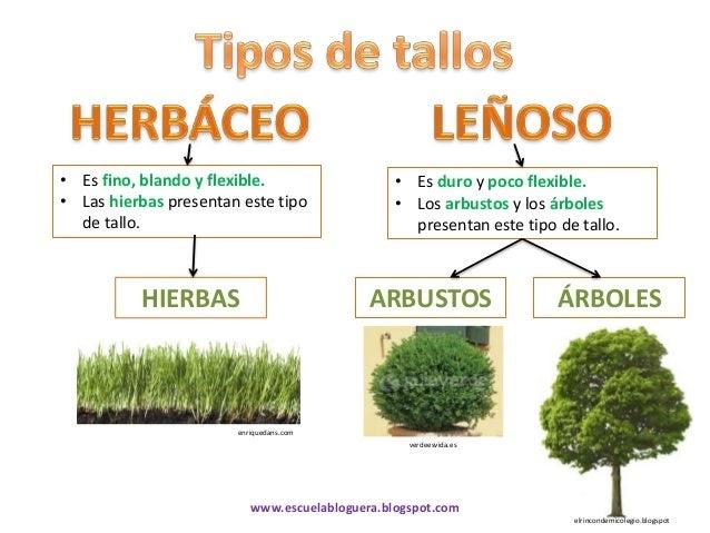 Las plantas tipos de tallo for Cuales son las partes de un arbol