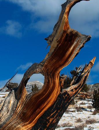 Mount Silverheels in winter