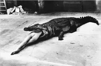 Newton Croc