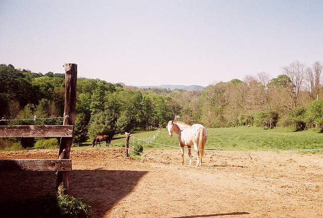 pasture1