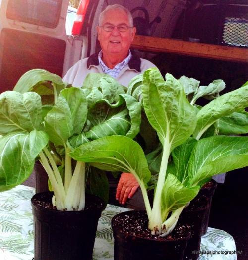 Enjoy Bok Choy All Winter Long Thanks To Pierce Street Nursery And