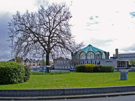 new Fairlop Oak