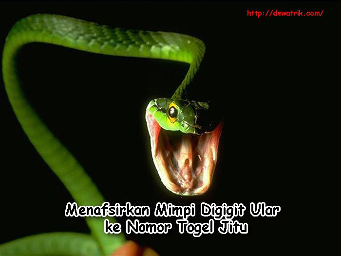 Mimpi menangkap ular hijau togel