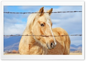 Wallpaperswide Com Horses Ultra Hd Wallpapers For Uhd Images, Photos, Reviews