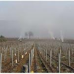 Chassagne-Montrachet | Chassagne-Montrachet : des feux de paille pour protéger les jeunes pousses du gel