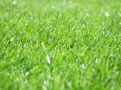 Grass800x600