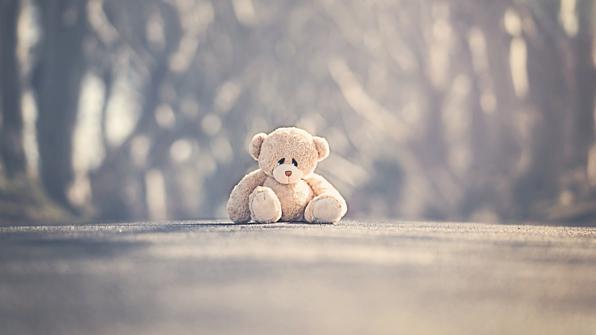 Sad Alone Teddy Bear On Road Wallpapers 1920x1080 260345