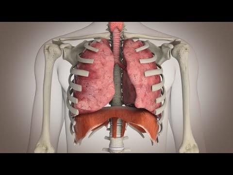 Video: Cómo funciona el sistema respiratorio.