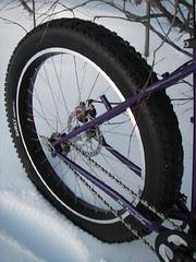 bike_pugs_rrwheel