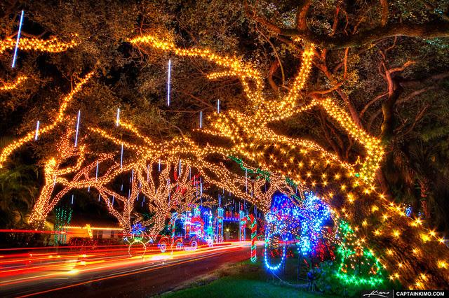 Live-Oaks-with-Christmas-Lights-on-Neighborhood-Street