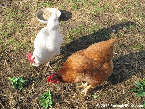 this week's Friday farm fix 5 - FarmgirlFare.com